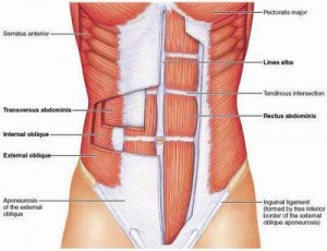 abdominals 300x230 Functional Anatomy Part 6 Abdominal Muscles